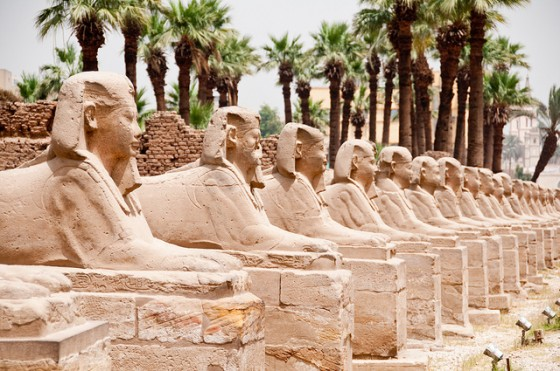 Line of palms behind sphinxes