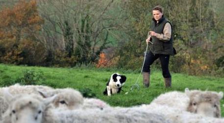 will sheep dogs return for post peak oil farming